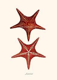 41 best life u0027s a beach images on pinterest nautical wall art