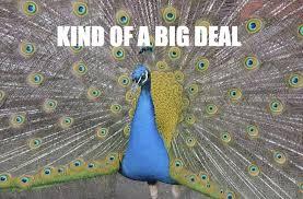 Peacock Meme - 10 people you hate on social media pissedlist