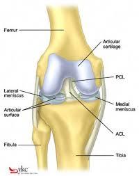 Interactive Knee Anatomy Crossfitting With Arthritis 321gomd