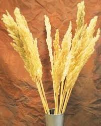 25 best tropical dried grass for vases images on