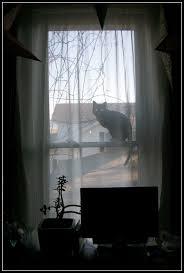 spooky halloween silhouettes part ii beyondbaffled