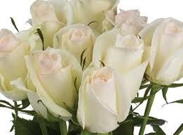 White Roses For Sale 90 Best Long Stem Roses For Cut Flowers Images On Pinterest