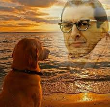 Jeff Goldblum Meme - the greatest jeff goldblum tributes on the web