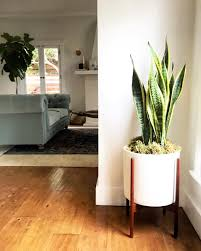 plants for office inspiration interesting corner potted plant on laminate wood