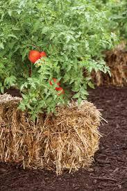 straw bale gardening diy heirloom gardener