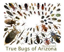 arizona beetles bugs birds and more happy new year with a