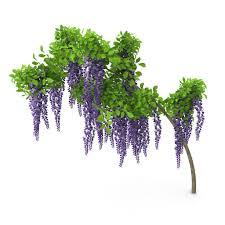 wisteria flowers model
