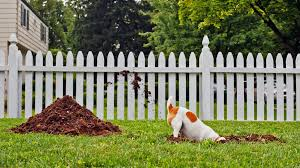 Is It Legal To Bury Your Dog In The Backyard - help my dogs are wrecking my yard u0027 realtor com