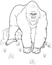 coloring page of gorilla gorilla 46 animals printable coloring pages