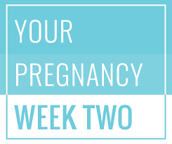 2 weeks pregnant symptoms u0026 what to expect emma u0027s diary