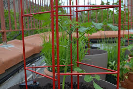 container gardening tomatoes home outdoor decoration