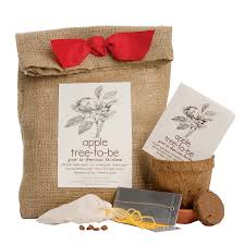 unique plant gifts seed kits tree gifts uncommongoods
