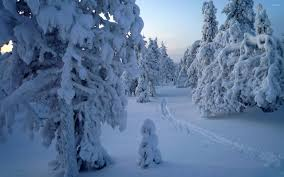 snowy tree statues in the forest wallpaper nature wallpapers