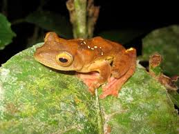 borneo frog paradise claire keely u0027s research