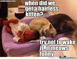 Hairless Cat Meme - hairless cat memes best collection of funny hairless cat pictures