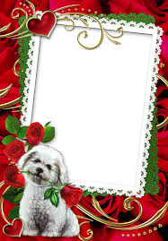 puppy with red roses transparent frame frames pinterest red