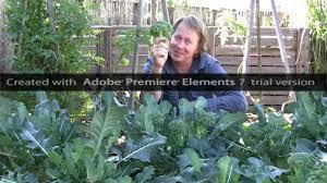 growing broccoli vegetable gardening youtube