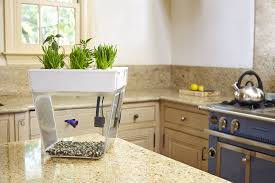 Countertop Herb Garden by Amazon Com Back To The Roots Water Garden Amazon Launchpad