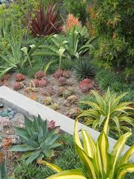 plants native to southern california image of low maintenance landscaping ideas plants rock and home