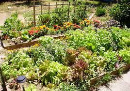 diy raised bed backyard vegetable garden with various plants and