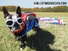 Halloween Dog Costume 10 Adorable Diy Halloween Costumes Pets Inhabitat Green
