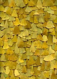 yellow mustard color gold mustard yellows 16 colour patterns pinterest mustard