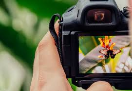 Digital Photography Beginner S Digital Photography Sat 21st April Hanwell Wine Estate