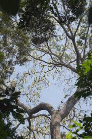 a bean tree macrosystems ecology lab