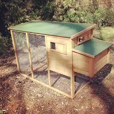 the birds assembling our backyard chicken coop