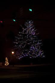 christmas lights net style christmas lights in louisville