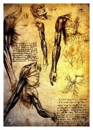 leonardo da vinci human circulation ancient anatomical drawings
