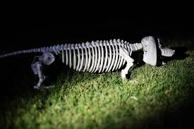 halloween flashlights animal skeleton flashlight hunt u2014 all for the boys