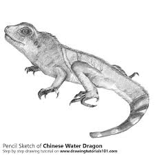 chinese water dragon pencil drawing how to sketch chinese water