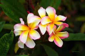 flowers san diego flowers flora