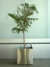 office plant top 7 office plants to bring the green back into your working
