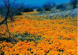 flowers tucson flowers at their best tucson nogales move to