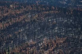 Wildfire Alerts Bc by State Of Emergency Over B C Wildfires Extended For Third Time