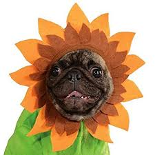 Sunflower Halloween Costume Amazon Rubie U0027s Pet Costume Large Sunflower Pet Supplies