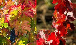 7 spots fall color california kcet