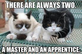Star Wars Cat Meme - luxury 23 star wars cat meme testing testing