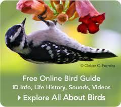Magpie Birds In Backyards Sick Birds And Bird Diseases Feederwatch