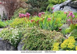 rock garden stock images royalty free images u0026 vectors shutterstock
