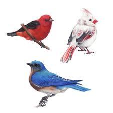 cute birds by zoestanleyarts on deviantart