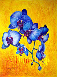 blue orchids blue orchids 1 original drawing