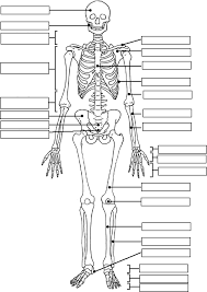 Human Anatomy And Physiology Study Guide Pdf Image Result For Free Human Anatomy Coloring Pages Pdf Human