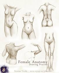 Anatomy Of Human Body Sketches Female Anatomy Drawing Practice By Serenaverdeart On Deviantart
