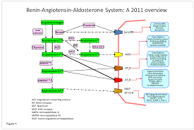 the renin angiotensin aldosterone system in renal and