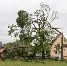 Das Wetter In Bad Oeynhausen Unwetter Zog Ein Tornado über Westfalen Hinweg Welt