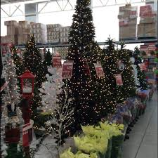 Planting Christmas Tree Seedlings Are You Ready For Christmas Stop By Walmart Twin Falls