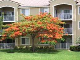 tropical flowering trees from around the world